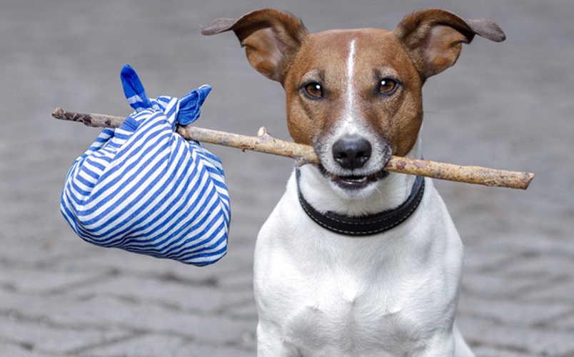 Free pet freebies uk